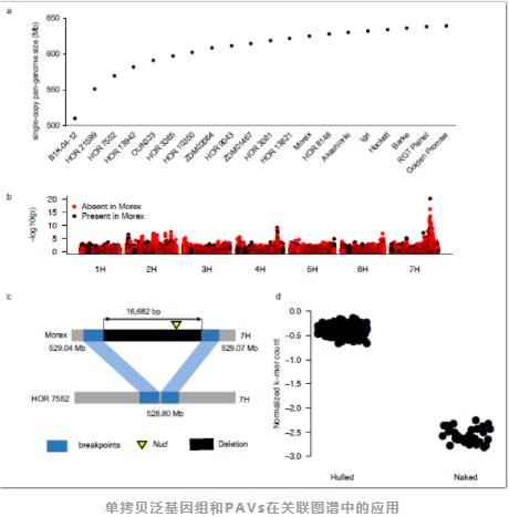 Nature:大麦泛基因组研究-3.png