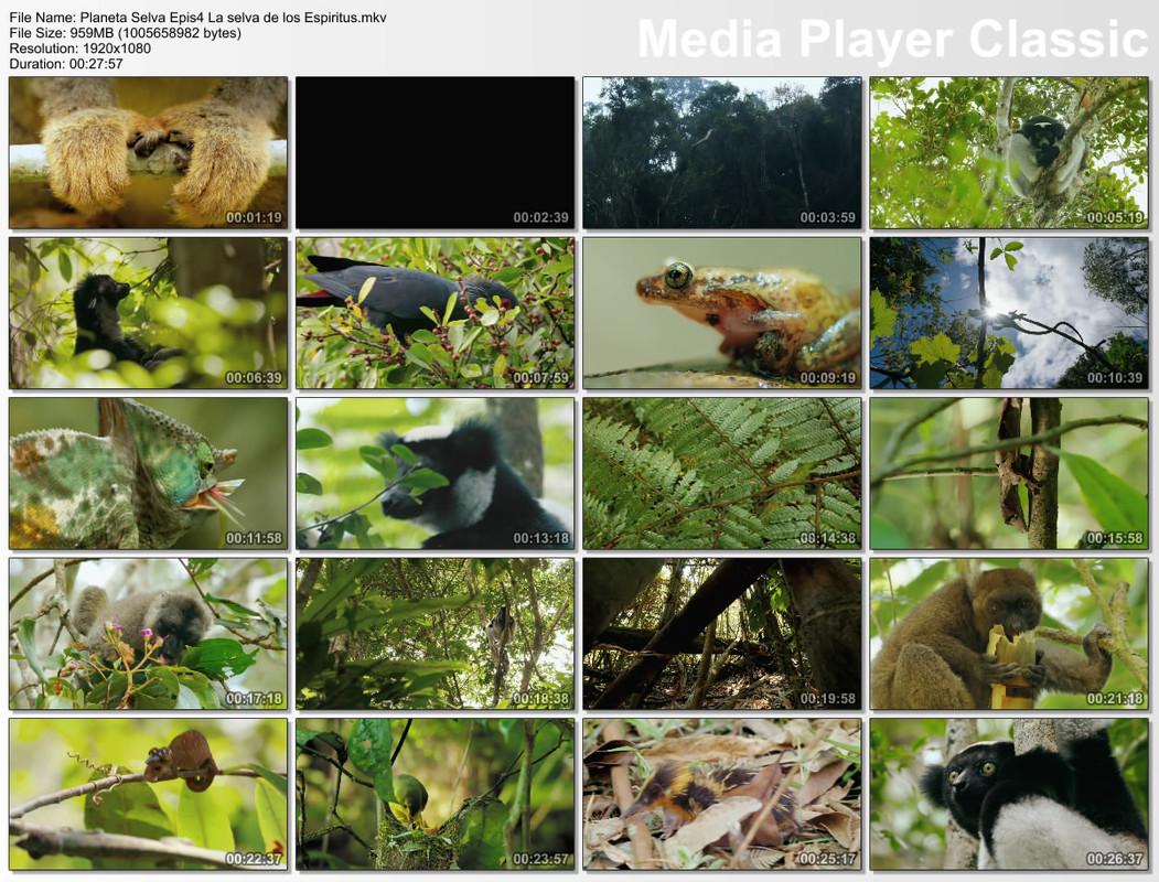 Planeta Selva 26 Documentales 1080p