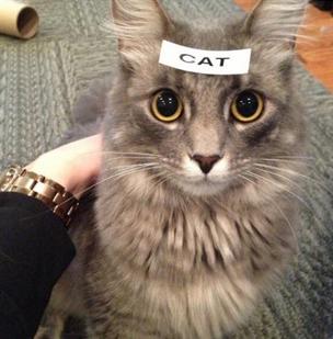 Cat comment meme